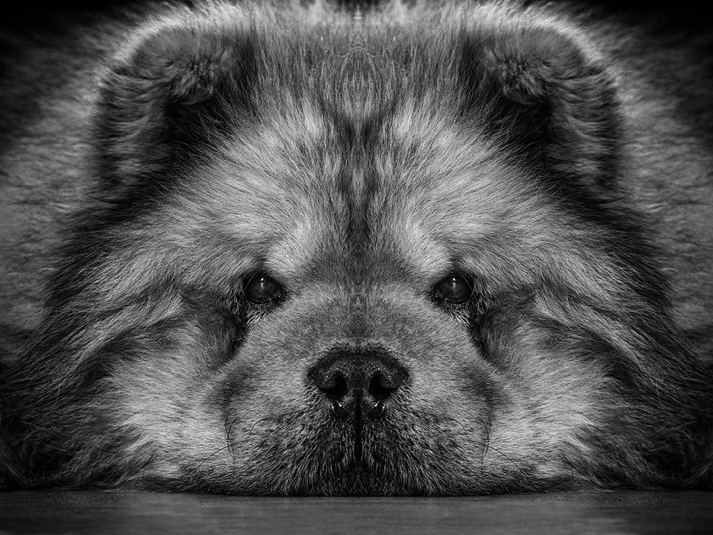 Symétrie canine ....  P1010210