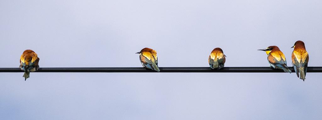 Les birds ... P1070011