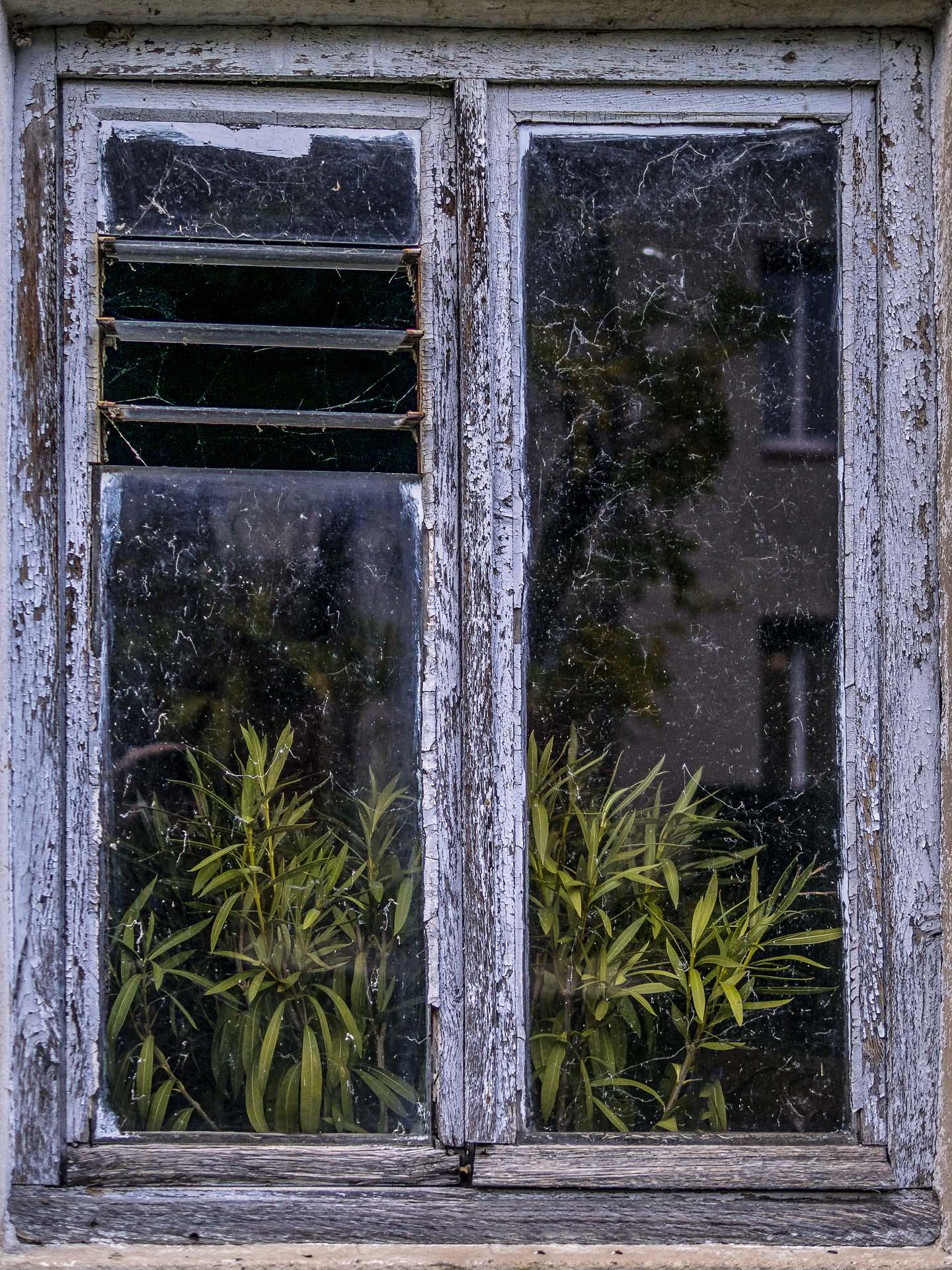 Confinement 1 photo jour à partir du 1 novembre - (FIL OUVERT A TOUS) P1120114