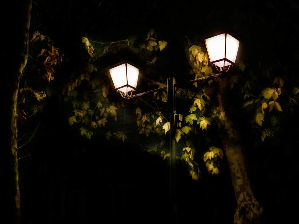 Confinement 1 photo jour à partir du 1 novembre - (FIL OUVERT A TOUS) P1120116