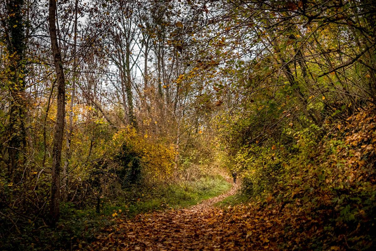 Confinement 1 photo jour à partir du 1 novembre - (FIL OUVERT A TOUS) P1120121