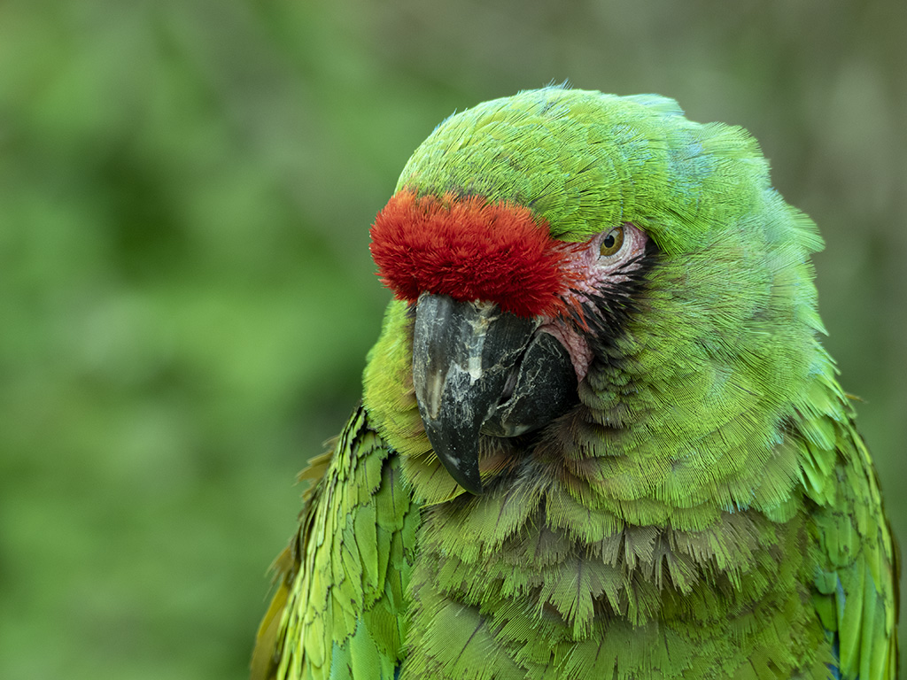 Vert avec une tache rouge  .... P5190015