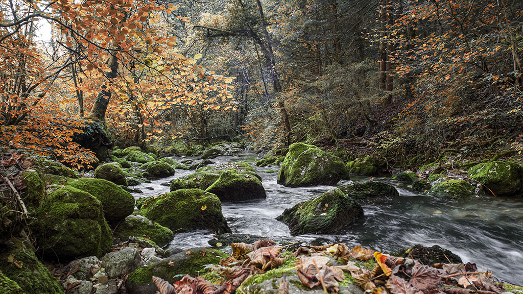 Ruisseau .. Pa260113