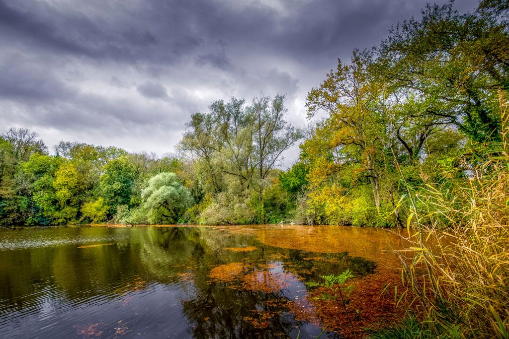 L'étang....  Pb050215