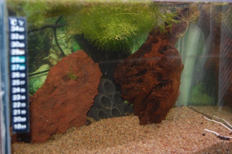 FISHROOM GEO29 Dsc_0013