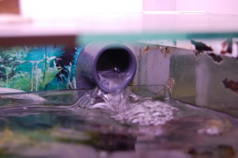 FISHROOM GEO29 Dsc_0014
