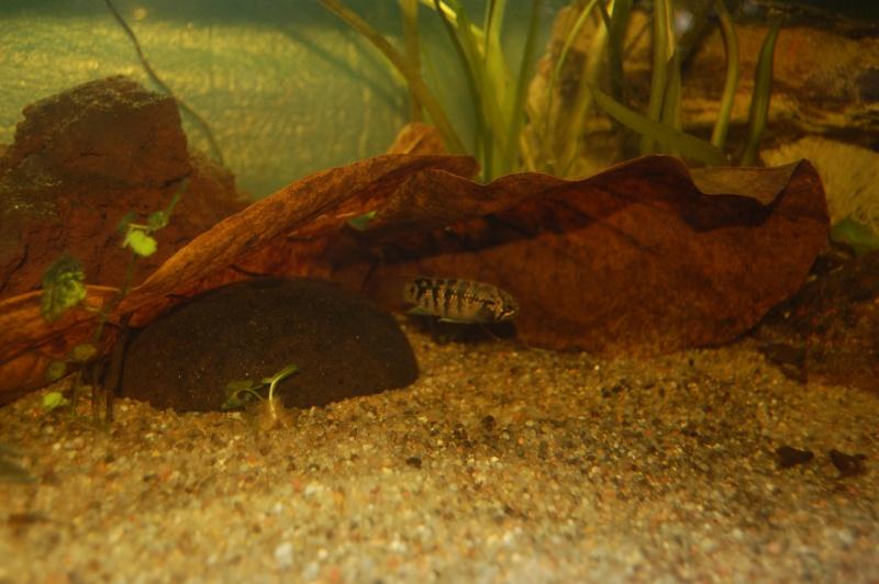 FISHROOM GEO29 Dsc_0020