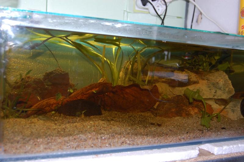 FISHROOM GEO29 Dsc_0021