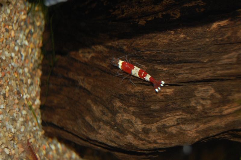FISHROOM GEO29 Dsc_0025