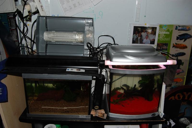 FISHROOM GEO29 Dsc_0041