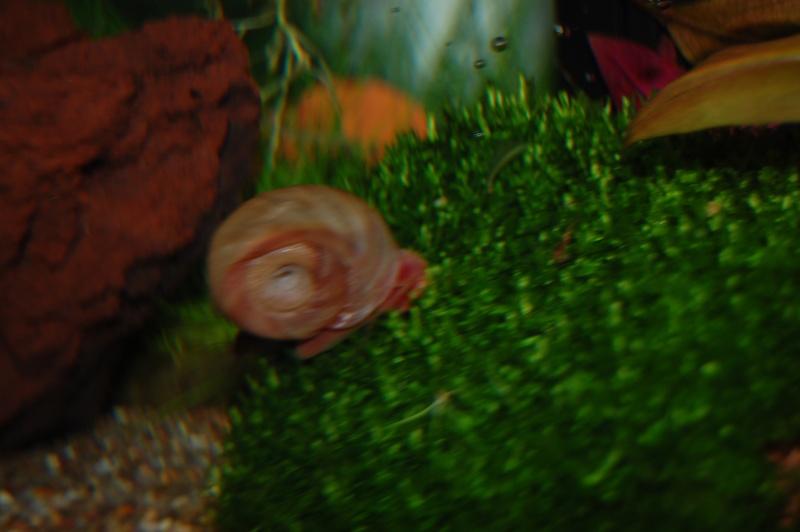 FISHROOM GEO29 Dsc_0113