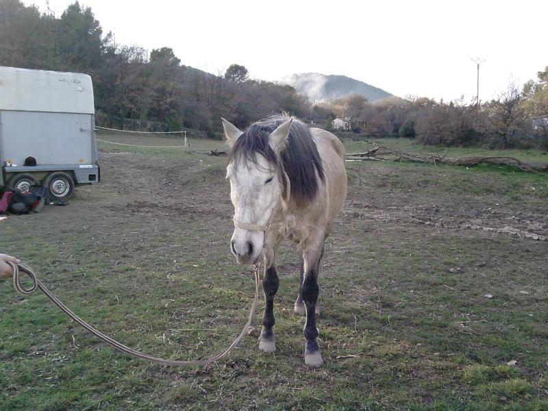 vend cheval 7ans  P2201111