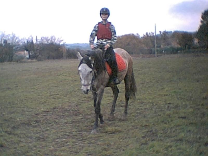 vend cheval 7ans  Photo_10
