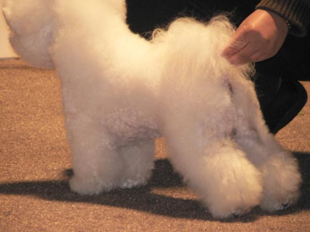 Nos chiens prennent la pose, statique exposition. - Page 2 P1030310
