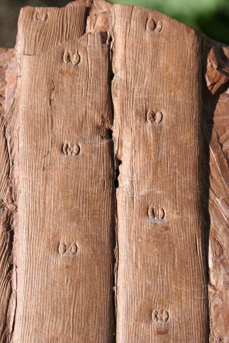 Traces de prédation  et perforations d 'insectes  29_09_11