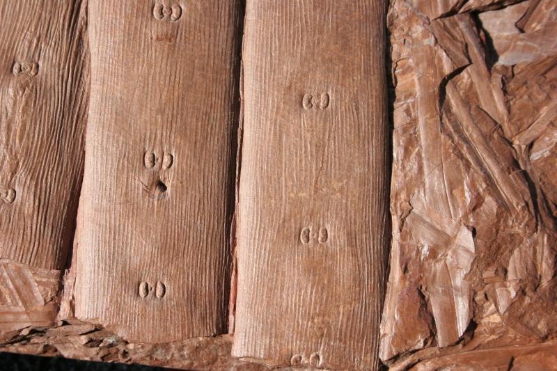 Traces de prédation  et perforations d 'insectes  29_09_12