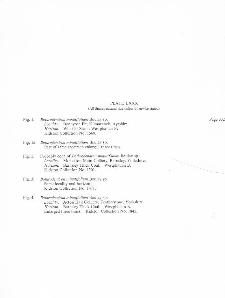 Bothrodendron Lindley et Hutton ,1833. File1811