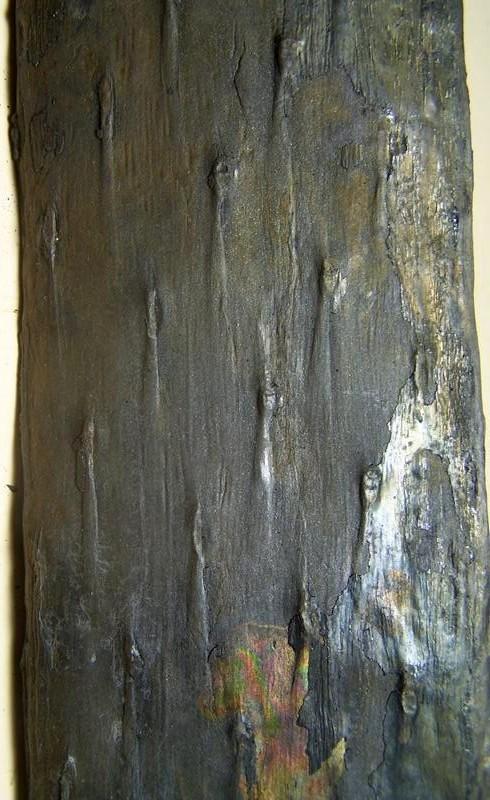 Des troncs et branches divers Fossil11