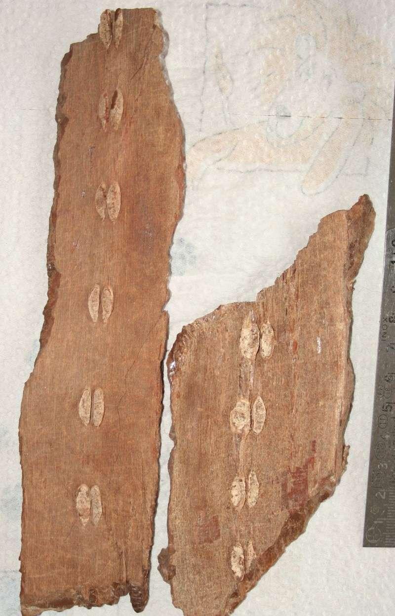Grès (Sandstone) Schistes( Shale) types de conservation Img_4523