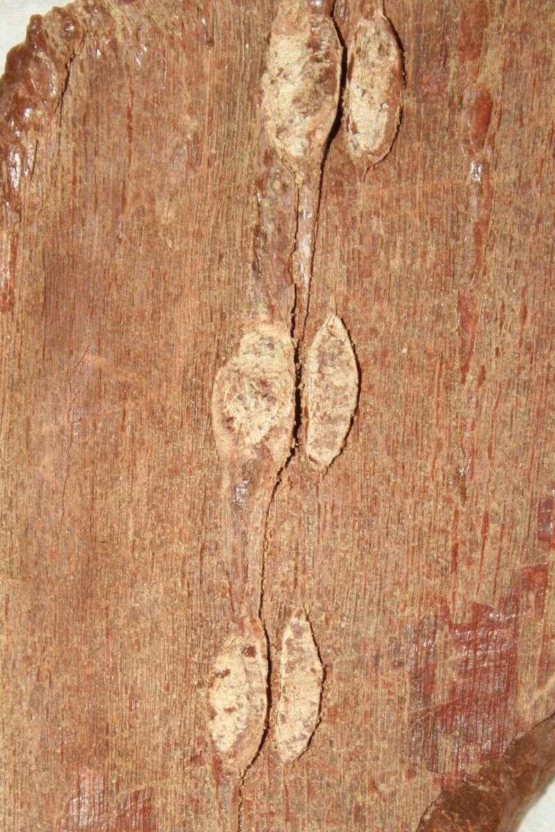 Grès (Sandstone) Schistes( Shale) types de conservation Img_4524