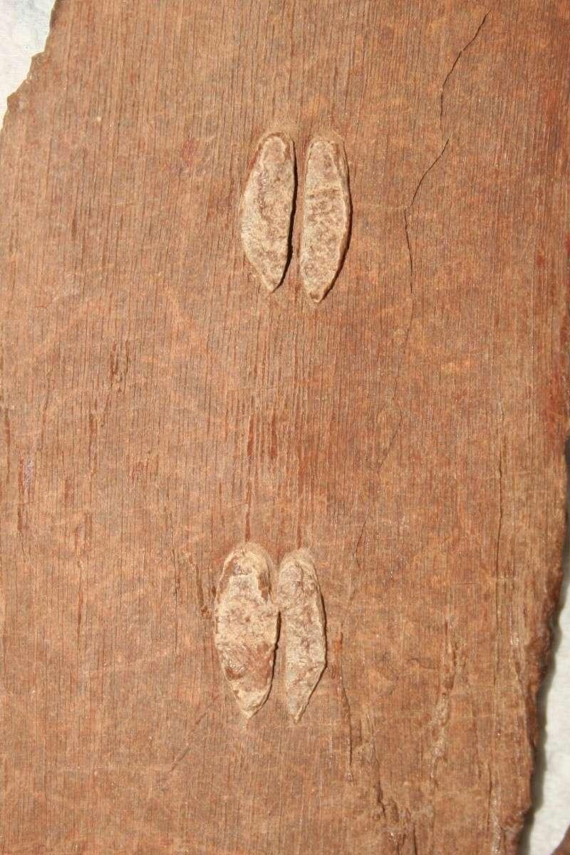 Grès (Sandstone) Schistes( Shale) types de conservation Img_4525
