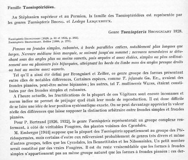 Taeniopteris Brongniart, 1832. Page_110