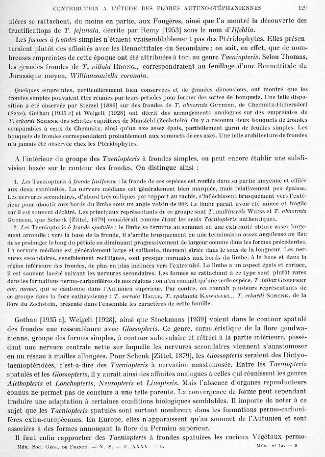 Taeniopteris Brongniart, 1832. Page_111