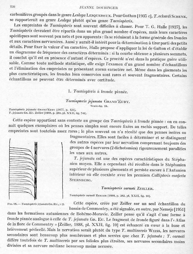 Taeniopteris Brongniart, 1832. Page_112
