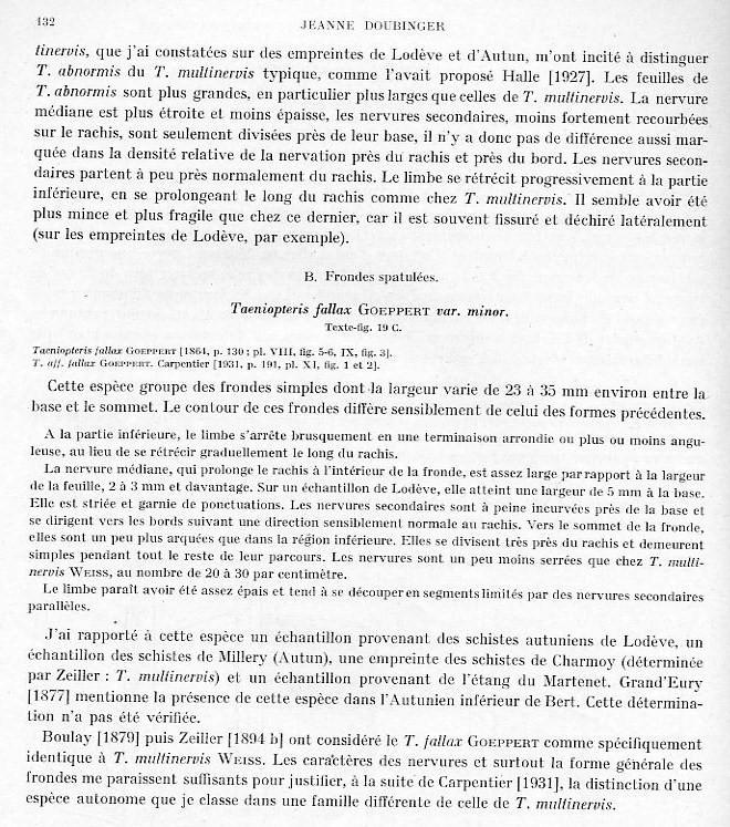 Taeniopteris Brongniart, 1832. Page_114