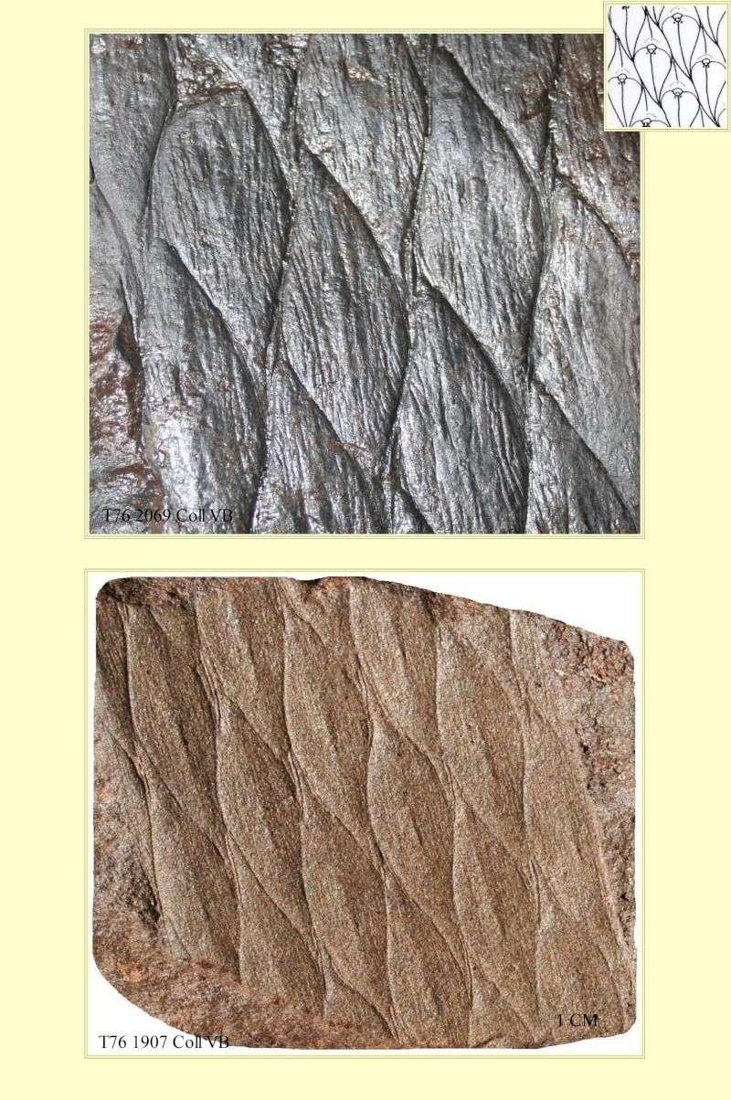 Spécimens à identifier (samples that need identification ) - Page 3 Pl_asp10