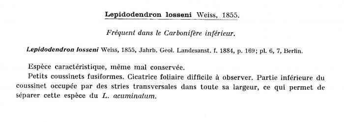 Quelques plantes du carbonifère inférieur (viséen )  Post-111
