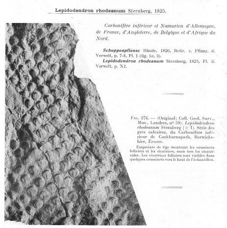 Quelques plantes du carbonifère inférieur (viséen )  Post-113