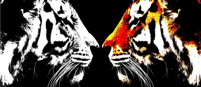 Tigres Tiger10