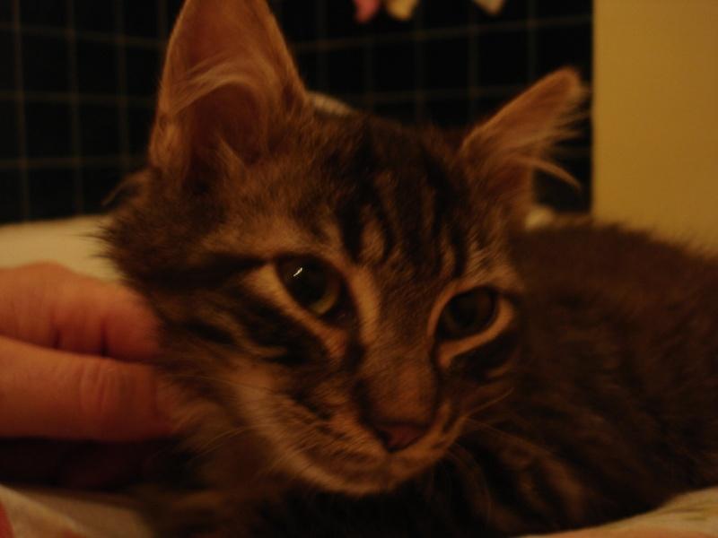 Loustic, 1 mois[Chippen, Dales (désormais a l'adoption)] 17_sep25