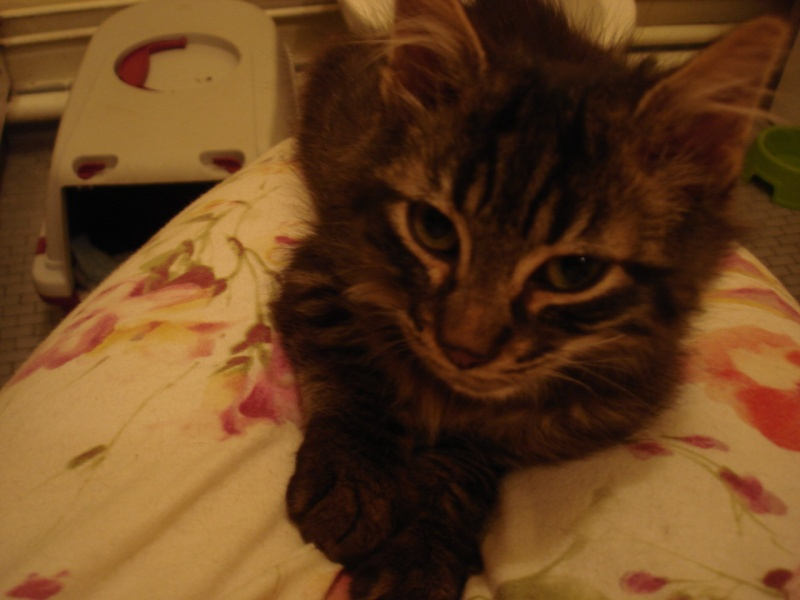 Loustic, 1 mois[Chippen, Dales (désormais a l'adoption)] 17_sep28