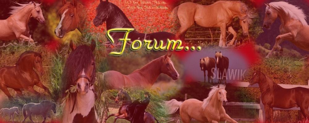 Forum des Gestüts Reno´s Traum