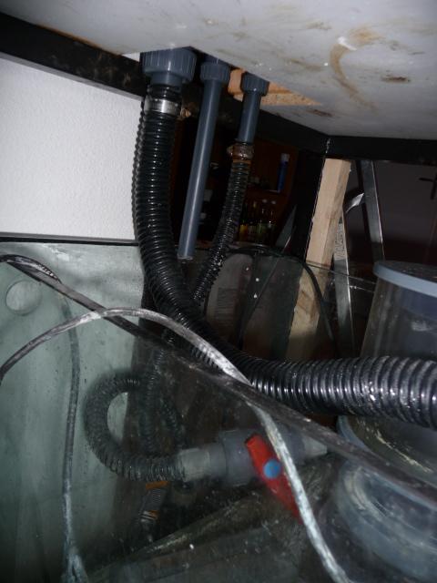 Chronique d'un récifal de 864 litres - Page 4 P1010126