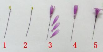 Cách làm hoa voan 12091213