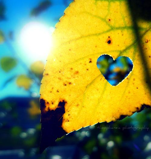 Các sao trong tình yêu 20121018