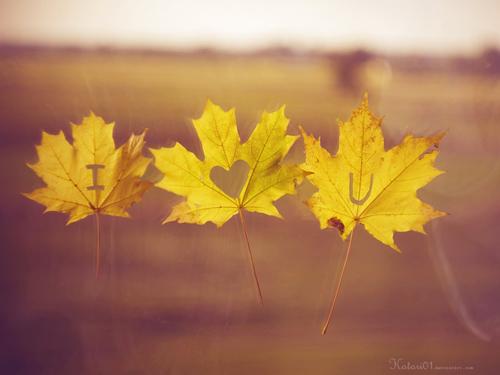 Các sao trong tình yêu 20121019