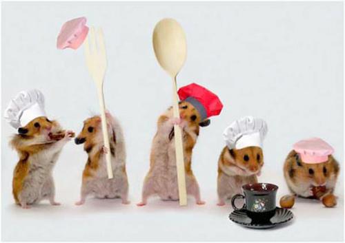 Hamsters siêu quậy 24fc8f10