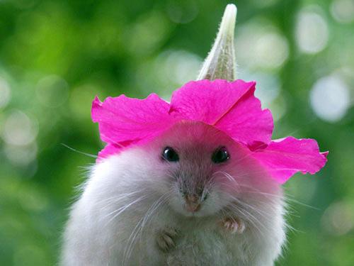 Hamsters siêu quậy 264c2810