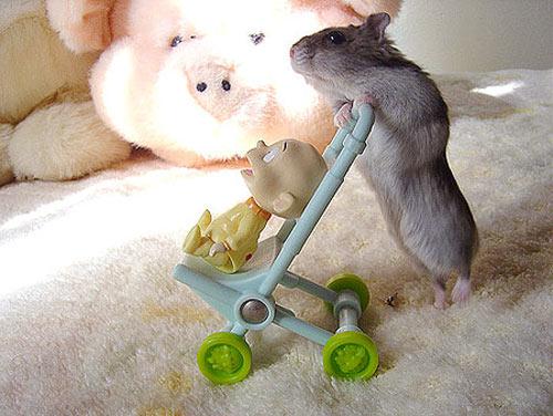 Hamsters siêu quậy A3e79b10