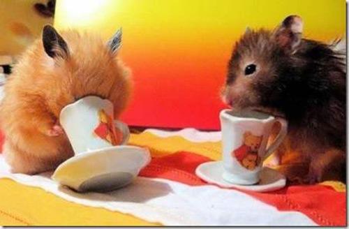 Hamsters siêu quậy Bad9dc10