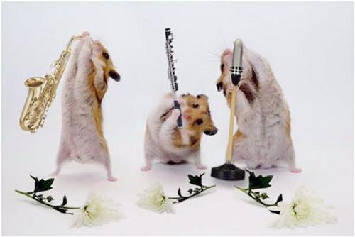 Hamsters siêu quậy C6d34e10