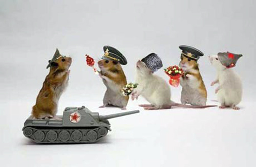 Hamsters siêu quậy Eac92310