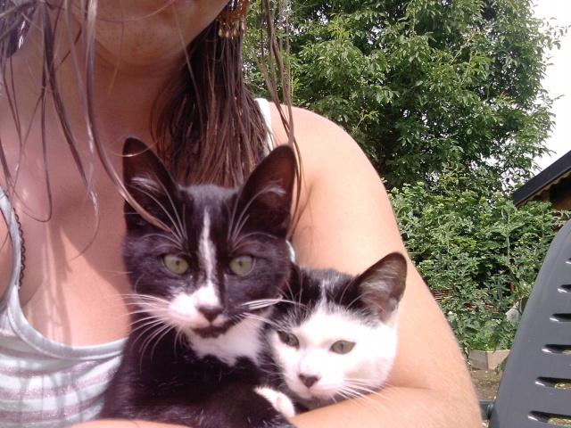 Mes deux chaton, et mon petit diable.. P1707110