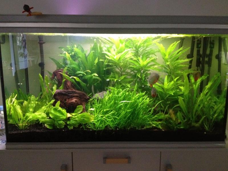 aquarium 360L brut piranhas Img_0211