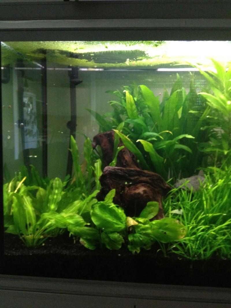 aquarium 360L brut piranhas Img_0212