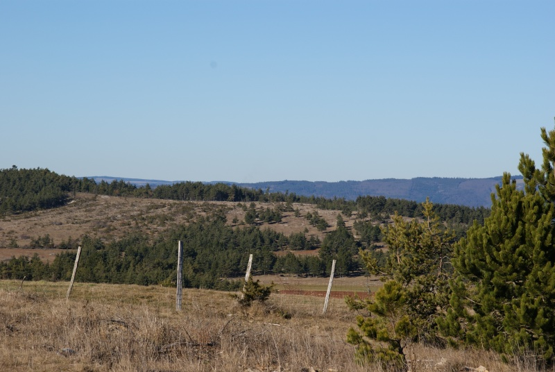 route du Causse de Sauveterre le 16 janvier 2011 Dsc01011